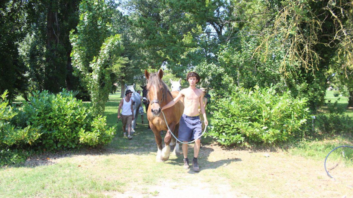 I cavalli entrano nel terreno gestito da La Serra Cento Fiori di Rimini