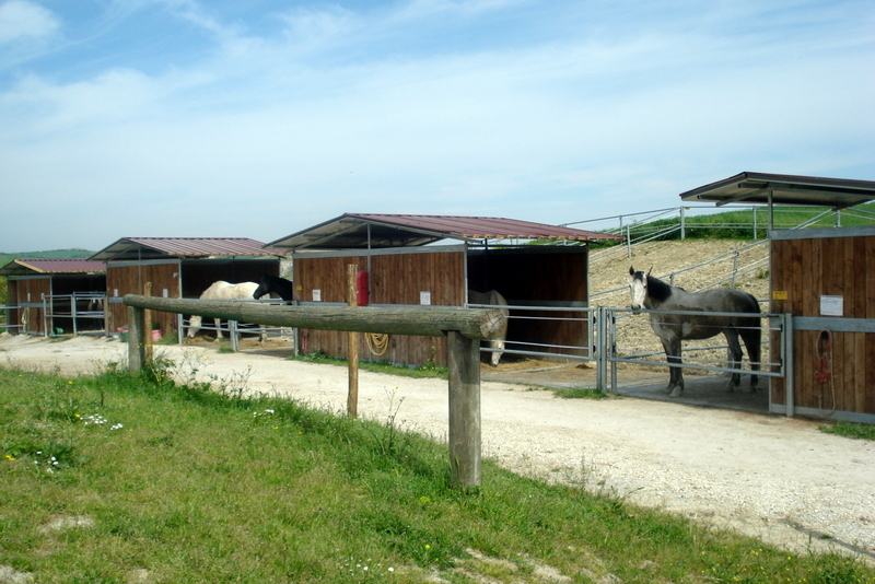 Capanne con paddock per pensione cavalli