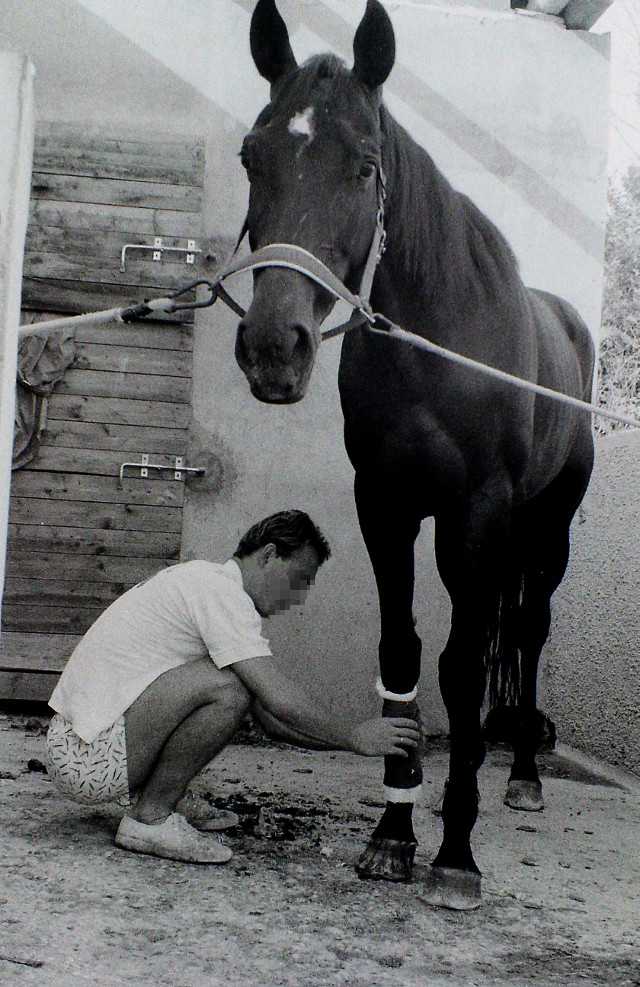 Artiere accudisce un cavallo alla scuderia Cento Fiori negli anni '80