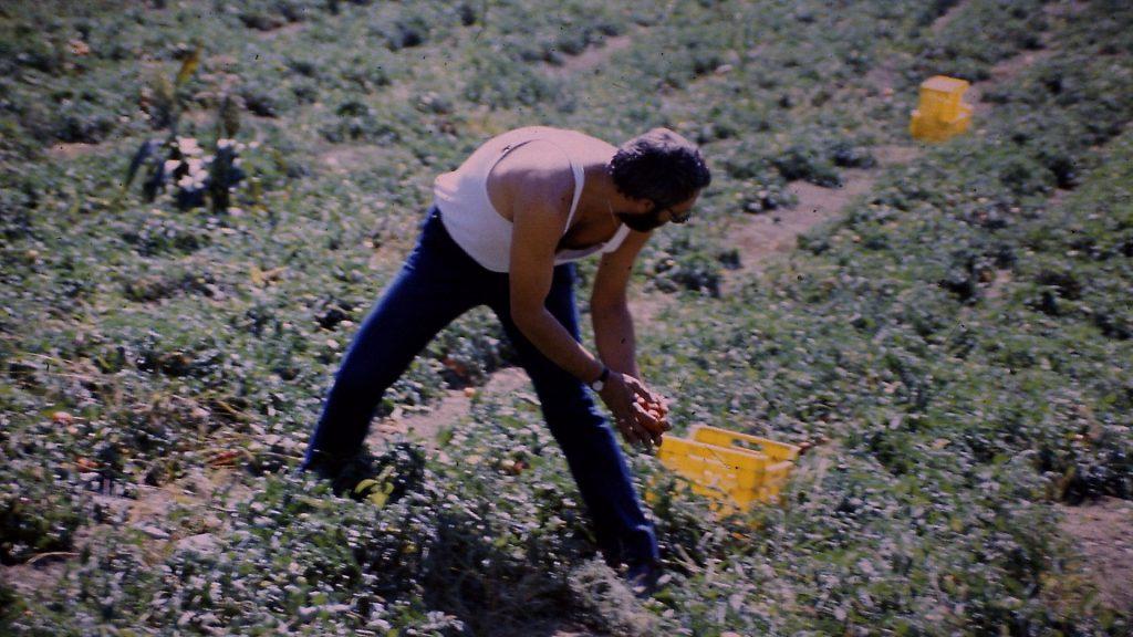 Werther Mussoni al lavororo nei campi di Vallecchio