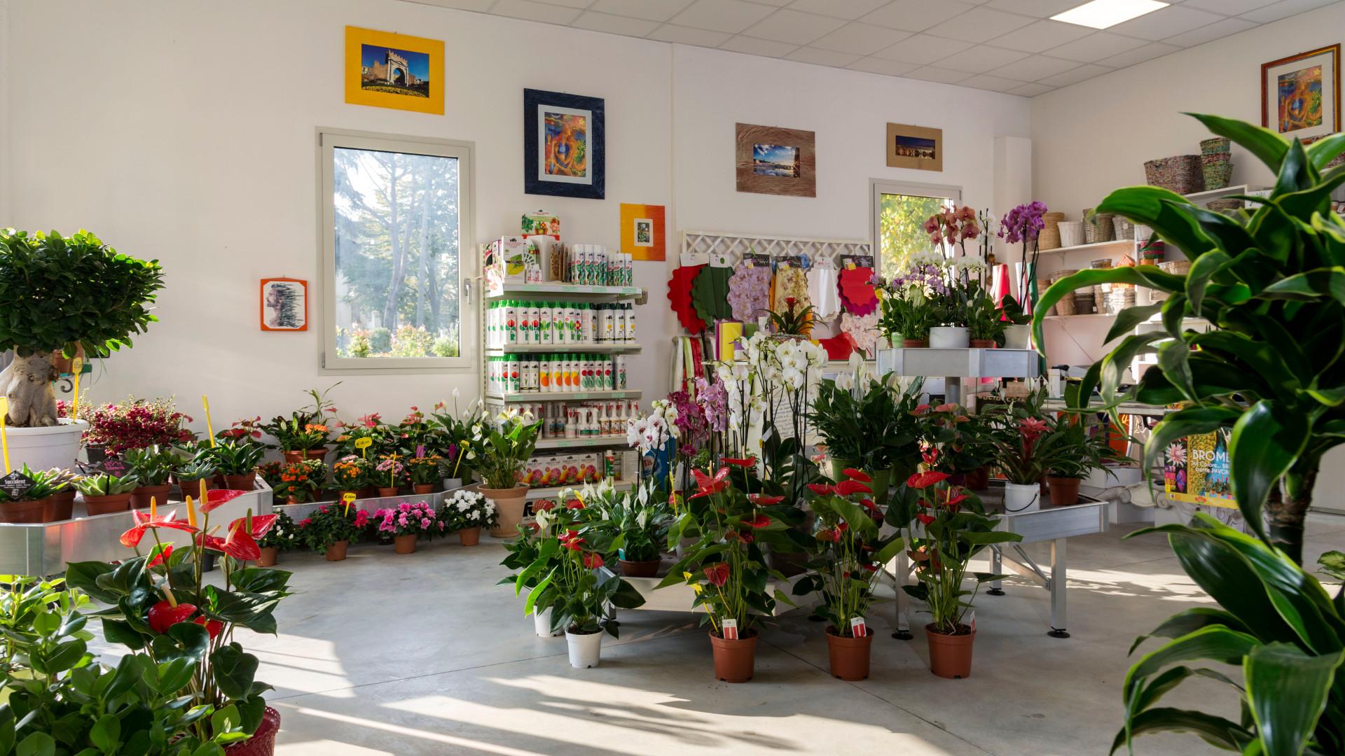 Piccole Serre Da Casa la serra cento fiori vivaio piante e fiori da interno e da